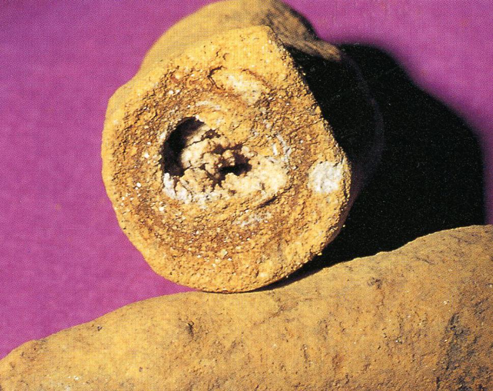 リモナイト(Limonite) この場合黄土の一種・主成分:含水酸化鉄 一般的に言う黄土から赤土などの褐鉄鉱の一種で、写真の標本は褐鉄鉱の成分が草の根の周囲に厚い皮常に殻を生成して管のようになったもので、俗名高師小僧(たかしこぞう)と呼ばれています。これを粉体とすると黄土色と成ります。標本産地:愛知県豊橋市高師原