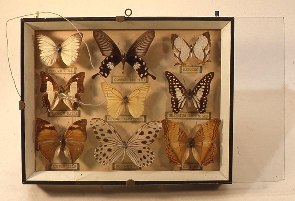 蝶類標本型鉱石式受信機 W242×D195×H40(mm)
