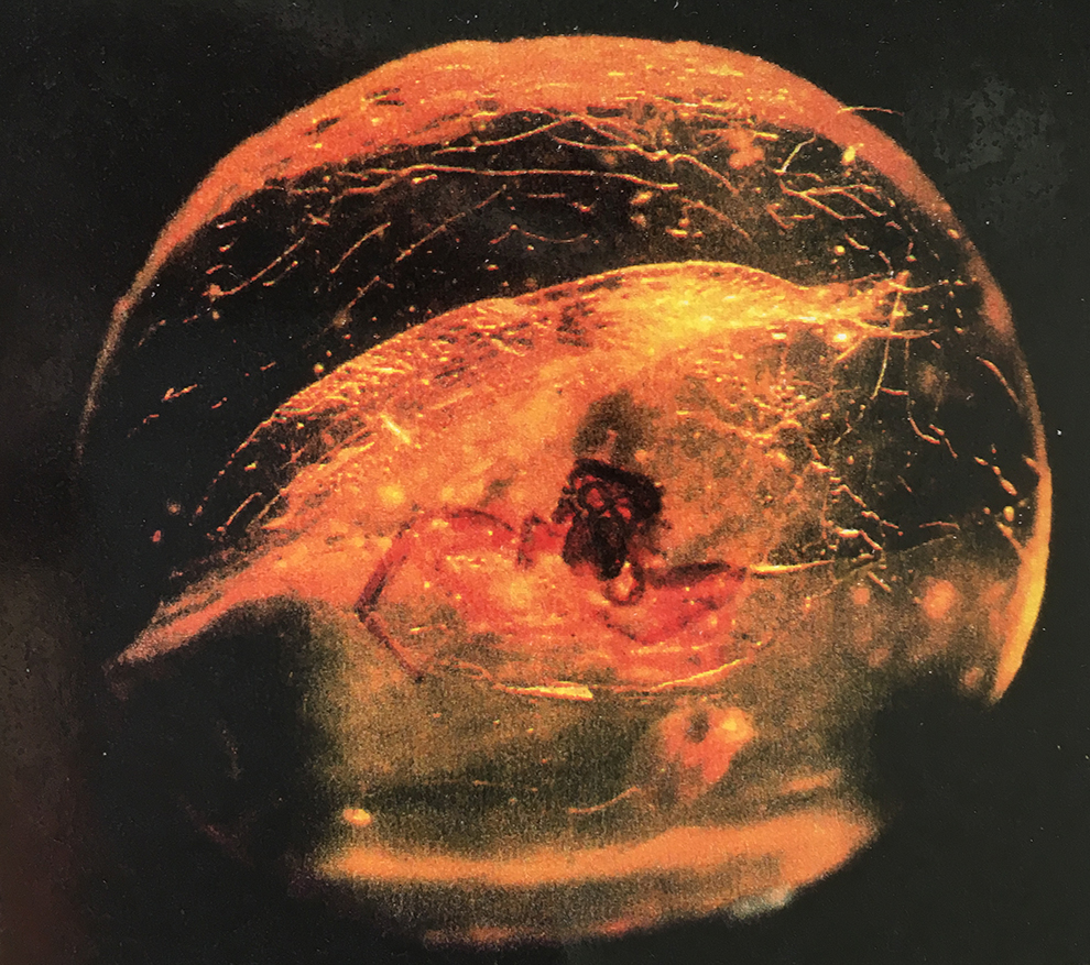 コハクの中の蜘蛛 おそらく不意にだろう。彼は濃厚な樹脂の中に落ちてしまった。やがて彼を取り巻いていたものは、気の遠くなるような時間とともに、一つの化石樹脂となり、彼を閉じ込め続けている。朽ち果てることも許されず、彼が見続けなければならなかったその後の地球の歴史について、どのように語ってくれるだろう。彼の故郷である地球が、それこそ不意に、急激な変化を余儀なくされた「人間」という現象の上に、まだ結果を出さずにいてほしいのだけど。