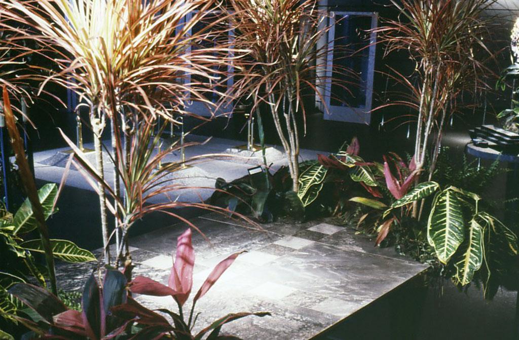 小林健二の家具の部分。根のしっかりと付いた状態で水やりを忘れなければ、展示中に花も咲き実もつけた。